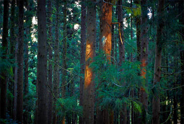 Forest by ChristopheCarlier