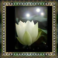 Lotus by ashlyn