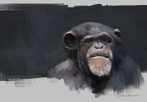 Ape Study by vladgheneli