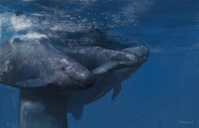 False killer whales by vladgheneli