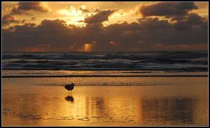 Seaside sunset paradise by jchanders