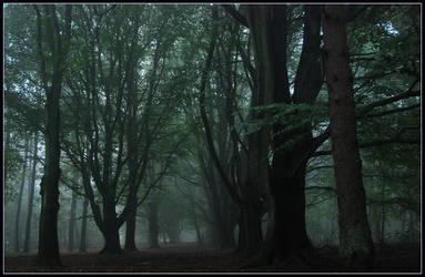 When a misty day began ... by jchanders