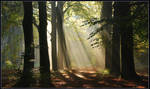 In the enchanted forest by jchanders