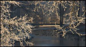 A frosty morning memory by jchanders