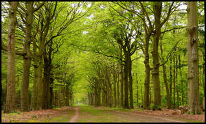 The old lane turning green by jchanders