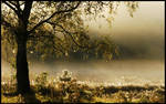 Enchanted in morning mist by jchanders