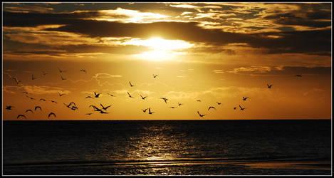 Early morning gulls by jchanders