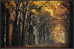 Ah, November sunshine ... by jchanders