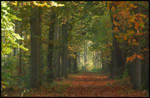 Remembering autumnal beauty by jchanders
