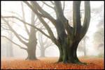 Giants in the mist by jchanders