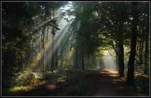 Remembering autumnal sunbeams by jchanders