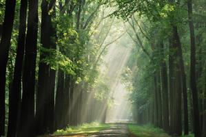 On the fairytale lane by jchanders