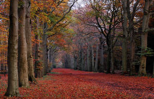 A late autumnal lane by jchanders