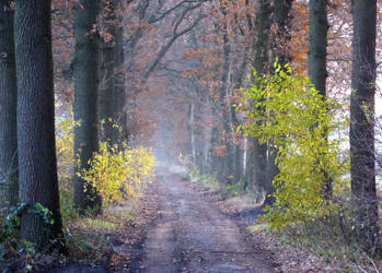 Going on a late autumnal walk by jchanders