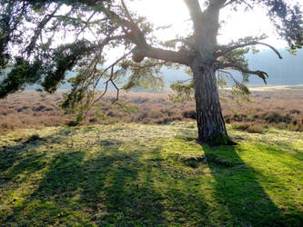 On the February heath by jchanders
