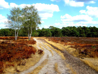 On the scorched heath in August 2018 by jchanders