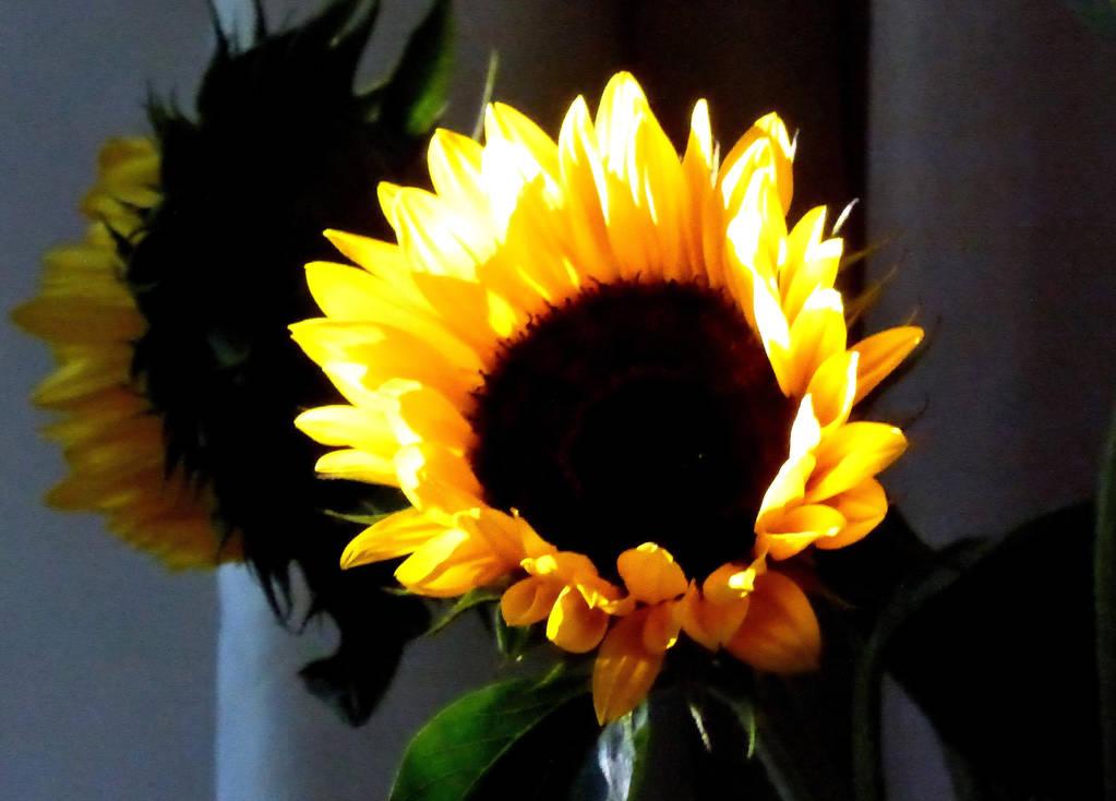 Sunshine power by jchanders