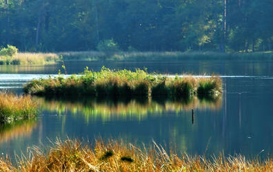 A little island in the September pond by jchanders