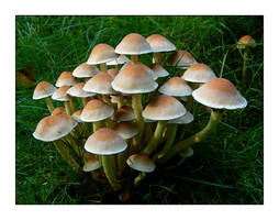 Another bunch of mushrooms by jchanders