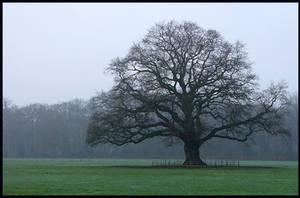 Another majestic oak-tree by jchanders
