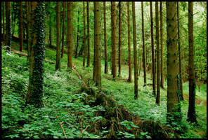 In the Ardennes forests by jchanders