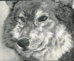 Wolf by y2jenn