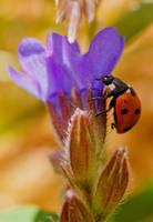 Lady Bug by AngelaLouwe