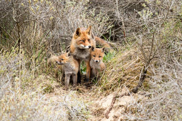 Fox Family by AngelaLouwe