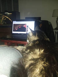 watching Rat Cam 93 -Playing with Sub-Zero by AmberKelly1223