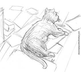 It's a cat. by caffeinejitsu