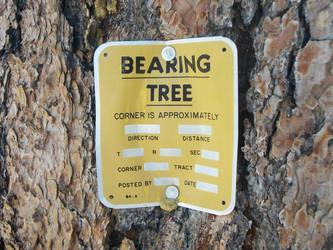 Bearing Tree? by Makapo