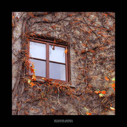 Window Between Seasons by Isquiesque