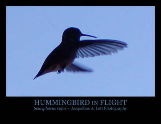 Hummingbird in Flight by Isquiesque