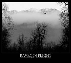 Raven in Flight by Isquiesque