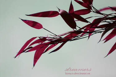 s t r e a m e r s by listening-to-silence