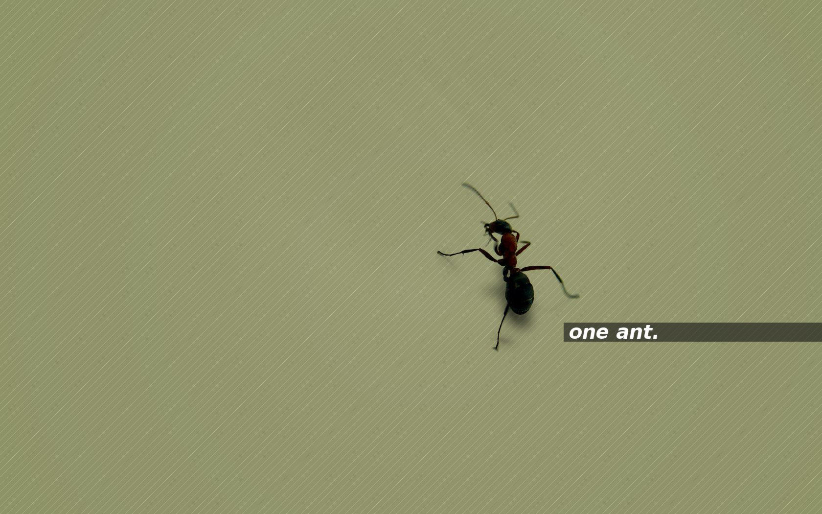 one ant. green by 10r