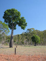Tree by WILKAT2