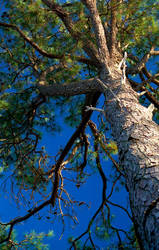 pine and blue by monkfu
