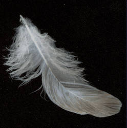 feather 7 by tash11-stock