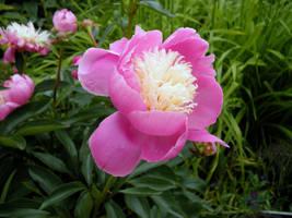 Flower 5 by TheFulkrum