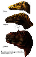 Tyrannosaurus growth series by amorousdino