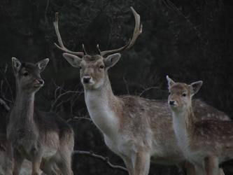 Deer, Stag and Calf by HandtilzyWolf