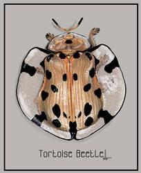 Tortoise Beetle by DesigningLua