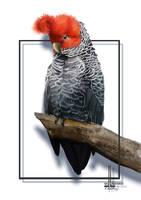 The Gang Gang Cockatoo by DesigningLua