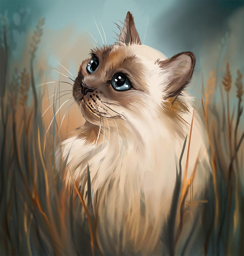 Cat by DesigningLua