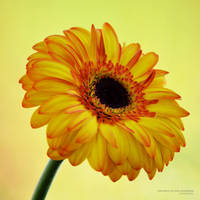 sun.burst by vicente-oliveira
