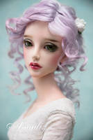 Winter rose by amadiz