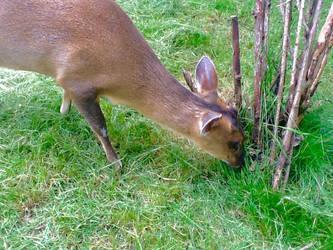 Little Deer by PokeTitan