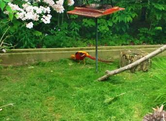 Bird's Garden by PokeTitan