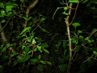 Through the Leaves by PokeTitan